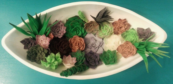 succulents 3
